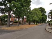 Oak way trees