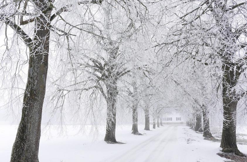 a path with snowy trees